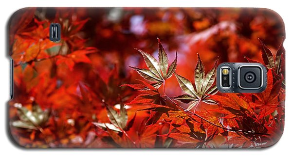 Sunlit Japanese Maple Galaxy S5 Case by Rona Black
