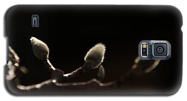 Sunlit Magnolia Buds Galaxy S5 Case