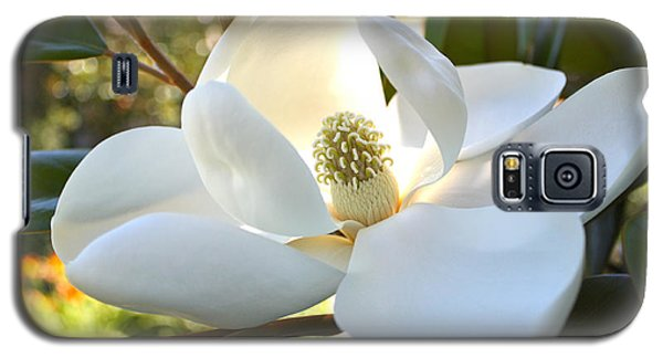 Sunlit Southern Magnolia Galaxy S5 Case