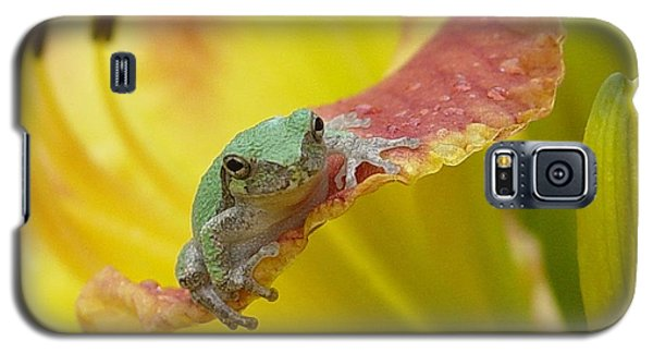 Sunning In A Day Lily Galaxy S5 Case by Carol Berning