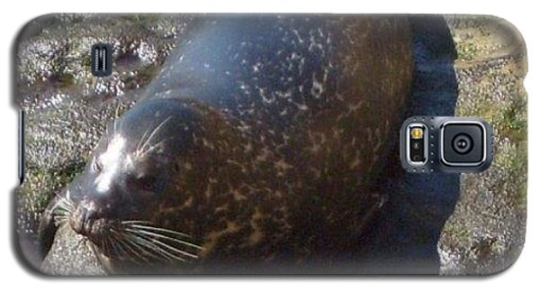 Galaxy S5 Case featuring the photograph Sunning Seal by Philomena Zito