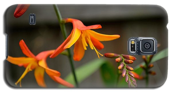 Galaxy S5 Case featuring the photograph Sunny Crocosmia by Scott Lyons
