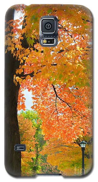 Sunny Fall Day By David Lawrence Galaxy S5 Case