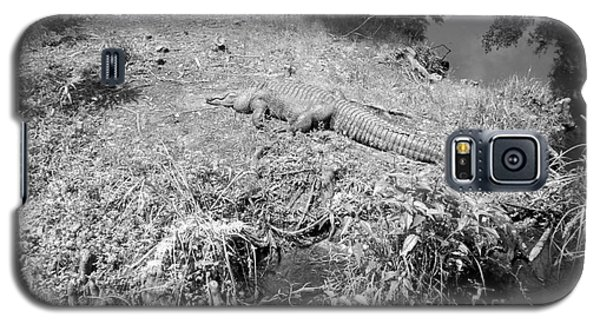 Galaxy S5 Case featuring the photograph Sunny Gator Black And White by Joseph Baril