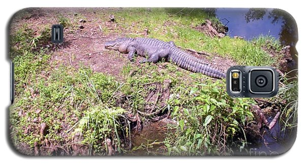 Sunny Gator  Galaxy S5 Case by Joseph Baril