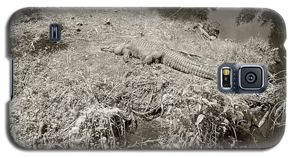 Galaxy S5 Case featuring the photograph Sunny Gator Sepia  by Joseph Baril