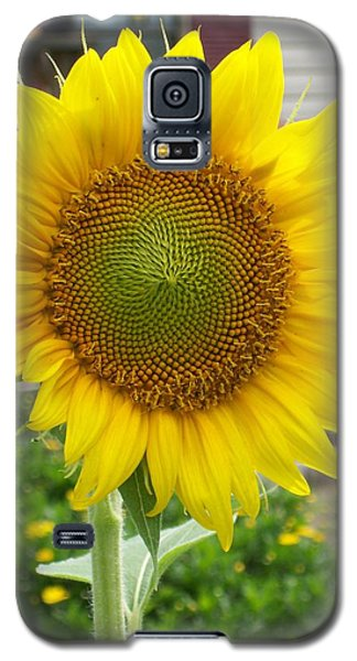 Bright Sunflower Happiness Galaxy S5 Case by Belinda Lee