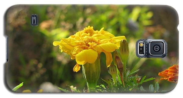 Sunny Marigold Galaxy S5 Case