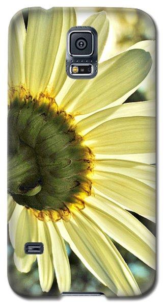 Sunny Shasta Daisy Galaxy S5 Case by Kelly Nowak