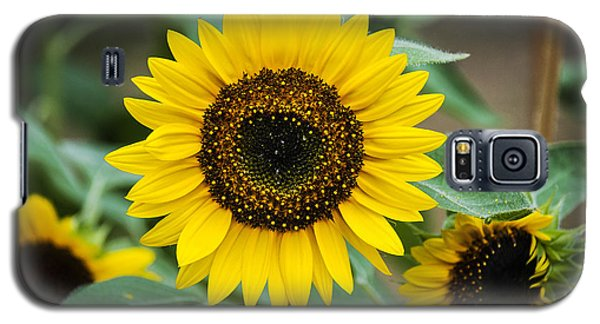Galaxy S5 Case featuring the photograph Sunny Smile Sunflower by Phil Abrams