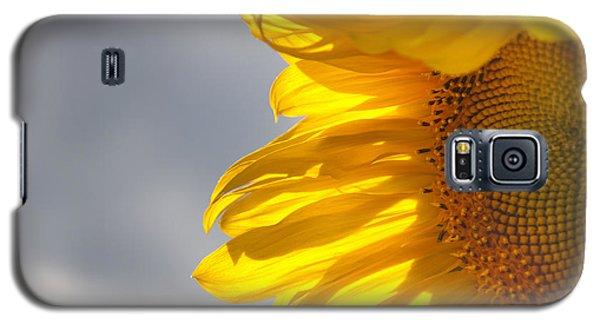 Sunny Sunflower Galaxy S5 Case by Cheryl Baxter