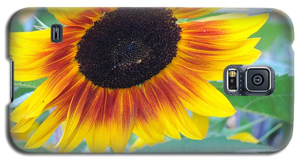 Sunny Sunflower Galaxy S5 Case