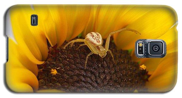 Sunny The Spider Galaxy S5 Case