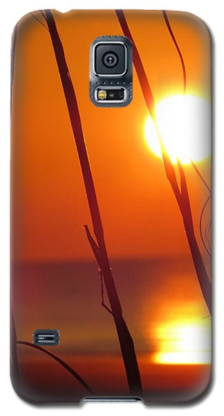 Galaxy S5 Case featuring the photograph Sunrise Plant by Nikki McInnes