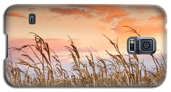 Sunset Against The Cornstalks Galaxy S5 Case by Dawn Romine