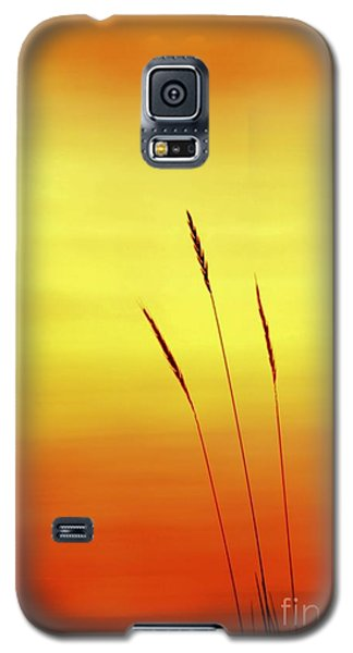 Sunset Galaxy S5 Case by Christopher Mace