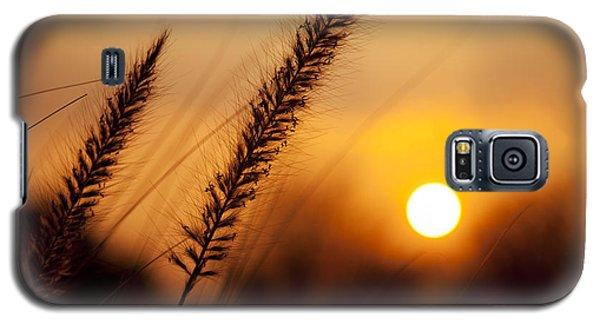 Sunset Fountain Grass Galaxy S5 Case