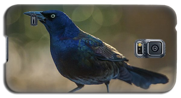 Sunset Grackle Galaxy S5 Case by Jim Moore