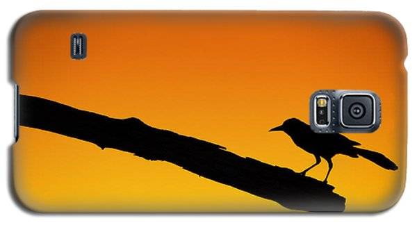 Sunset Grackle Silhouette Galaxy S5 Case
