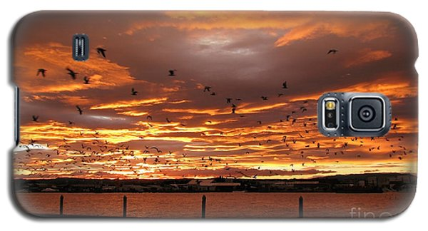 Sunset In Tauranga New Zealand Galaxy S5 Case by Jola Martysz