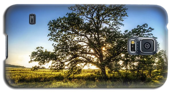 Branch Galaxy S5 Case - Sunset Oak by Scott Norris