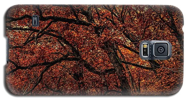 Sunset Oaks 2 Galaxy S5 Case by Trey Foerster