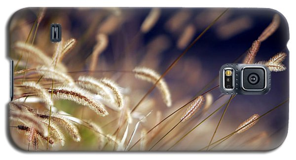Galaxy S5 Case featuring the photograph Sunset On Autumn Grass by Lincoln Rogers