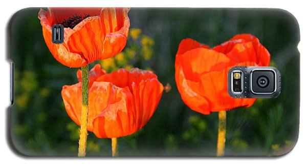 Galaxy S5 Case featuring the photograph Sunset Poppies by Debbie Oppermann