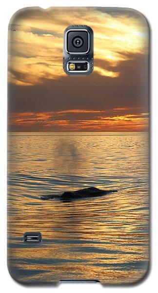 Sunset Wonder Galaxy S5 Case