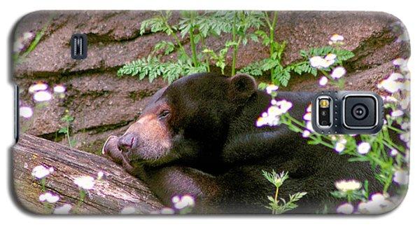 Galaxy S5 Case featuring the photograph Sunshine Bear by Adam Olsen