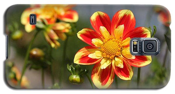 Sunshine Flower Galaxy S5 Case