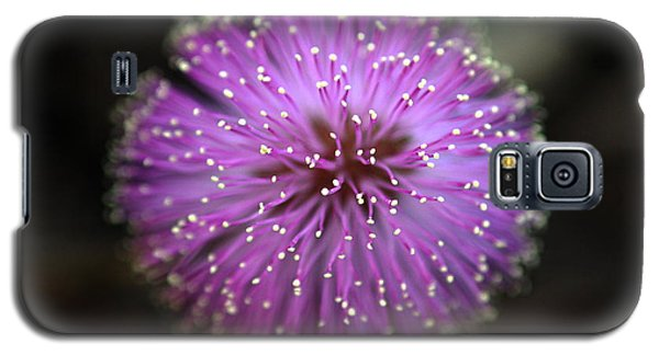 Galaxy S5 Case featuring the photograph Sunshine Mimosa by Greg Allore