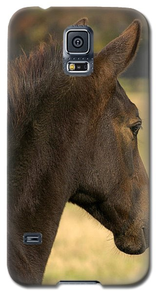 Galaxy S5 Case featuring the photograph Sunshine On My Shoulder by Sami Martin