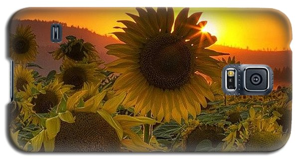 Scenic Galaxy S5 Case - Sunst And Sunfloers  #sunset by Mark Kiver