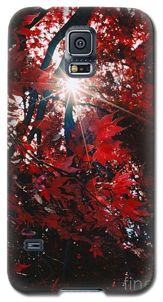 Sunstar Galaxy S5 Case by Jesse Ciazza