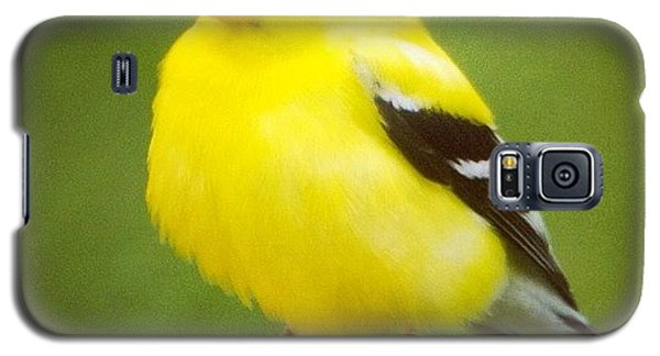 Super Fluffed Up Goldfinch Galaxy S5 Case by Heidi Hermes