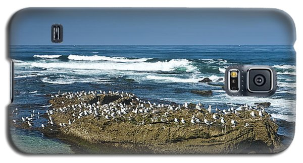 Surf Waves At La Jolla California With Gulls Perched On A Large Rock No. 0194 Galaxy S5 Case by Randall Nyhof
