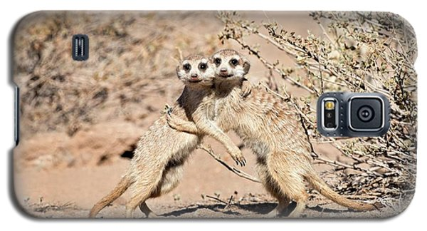 Meerkat Galaxy S5 Case - Suricates At Play by Tony Camacho
