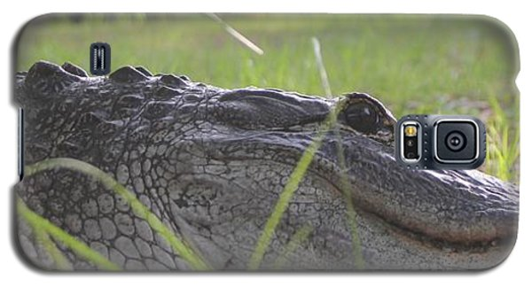 Galaxy S5 Case featuring the photograph Surprise Alligator House Guest  2 by Dodie Ulery
