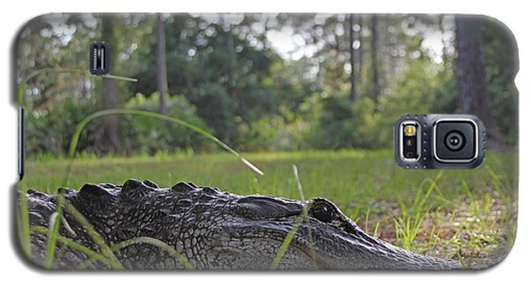 Galaxy S5 Case featuring the photograph Surprise Alligator Houseguest by Dodie Ulery