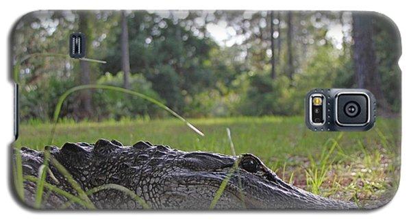 Surprise Alligator Houseguest Galaxy S5 Case by Dodie Ulery