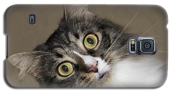 Surprise Galaxy S5 Case by Jeannette Hunt