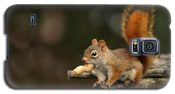 Galaxy S5 Case featuring the photograph Surprised Red Squirrel With Nut Portrait by Debbie Oppermann