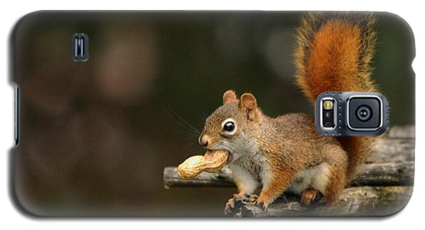 Surprised Red Squirrel With Nut Portrait Galaxy S5 Case by Debbie Oppermann