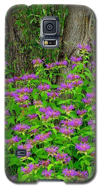 Surrounded Galaxy S5 Case by Rodney Lee Williams
