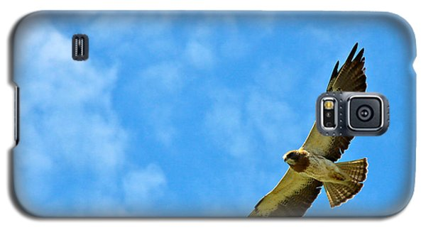 Swainson's Hawk Snake River Birds Of Prey Natural Conservation Area Galaxy S5 Case