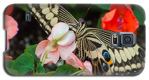 Swallow Tail Butterfly Galaxy S5 Case