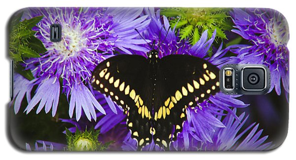 Swallowtail And Astor Galaxy S5 Case
