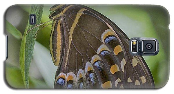 Swallowtail Galaxy S5 Case by Anne Rodkin