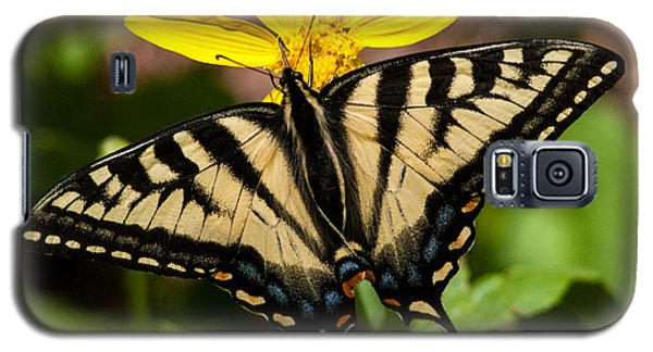 Swallowtail Butterfly Galaxy S5 Case by Jack Bell